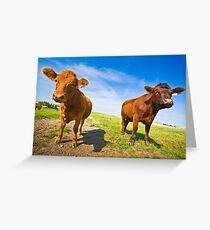 Two Serious Cows Greeting Card