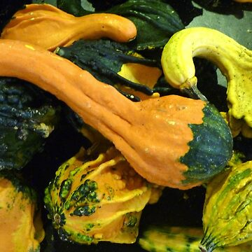 Gourds for the Season by webster7
