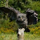Baby Great Gray Owl by Heather King