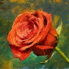 Red Rose by Kenneth Hoffman