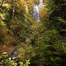 Hertz Trail Waterfall by Appel