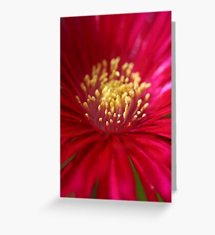 Red or Pink Greeting Card