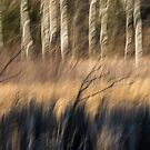 Abstract of Birch At The Edge Of The Marsh 2018-1 by Thomas Young