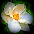 White Magnolia Blossom by Richard-Gary Butler