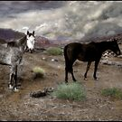 Ghost Horses on a High Plain Original by Wayne King