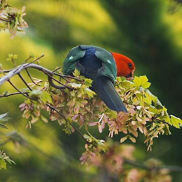 Spring King Parrot by bubbleblue