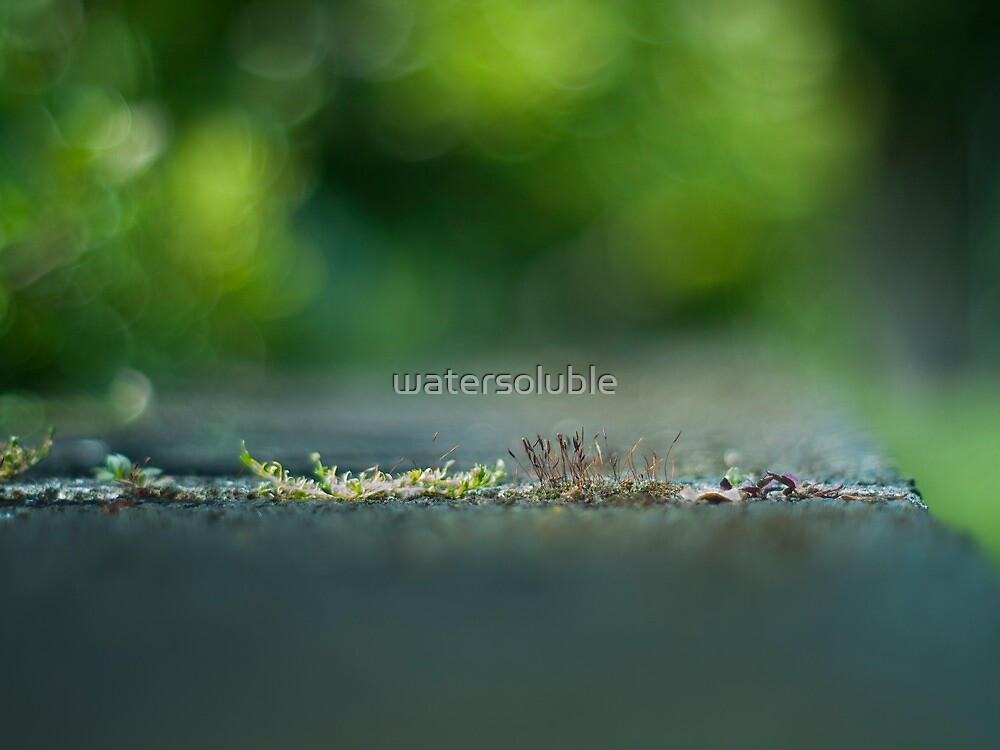 despite adversity, life prevails by watersoluble