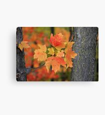 A little peice of autumn Canvas Print