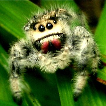 Jumping Spider by Heavenandus777