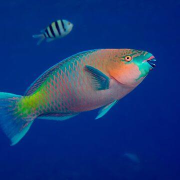 Parrotfish by lilithlita