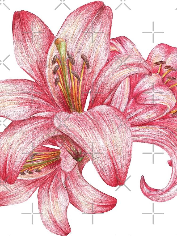 Lilie flowers_3 von lisenok