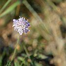 « Fleur violette » par HawaiianSurfer