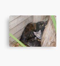 Undomesticated weening kittens - Polokwane Metal Print
