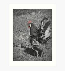 Little Speckled Sussex Roo Art Print