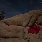 Desert Rose by Gosha Davis