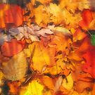 Autumn Leaves Beneath the Surface by Bob  Perkoski