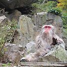 Yudanaka Snow Monkey #2 by Kate  B