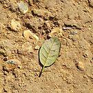 Lonely leaf by Rodney Bantleman