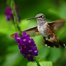 Little Hummer...Man these gays are fast...lol by joemc