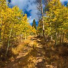 Fall on the Back Roads of Monitor Pass by photosbyflood