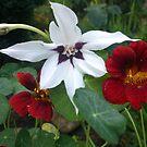Blüten von Gourmetkater