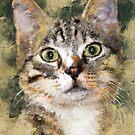 Cat Tiger #cat #kitty by JBJart