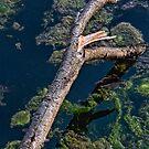 Help, I've Fallen, Said the Tree by DeerPhotoArts