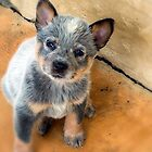 Australian Cattle Dog Pup by Deanna Gardam