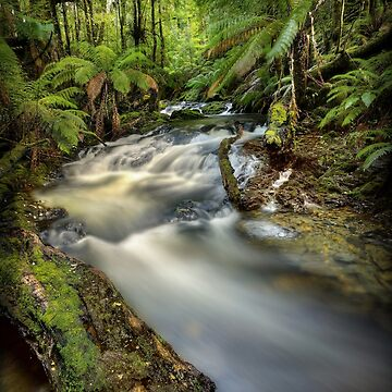 Arthur River headwaters, Tasmania by kevinmcgennan