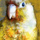 parrot #parrot #animals by JBJart