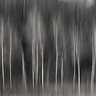 Abstract Of Birch At The Edge Of The Marsh 2018-2 by Thomas Young
