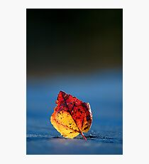 It's Fall in the Details, Take 2 Photographic Print