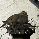 Dove and Chick by Kenneth Hoffman
