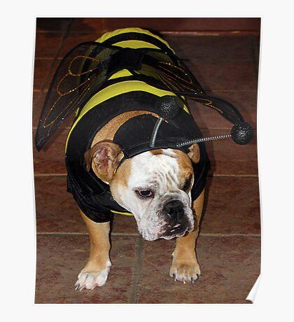 Bulldog Bumble Bee Poster