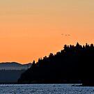 Seattle Ferry Orange Sunset by rachro