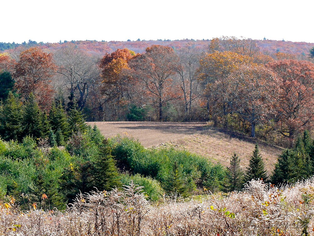 """Tree Farm On N Road"" - Autumns End Series © 2009 by Jack McCabe"
