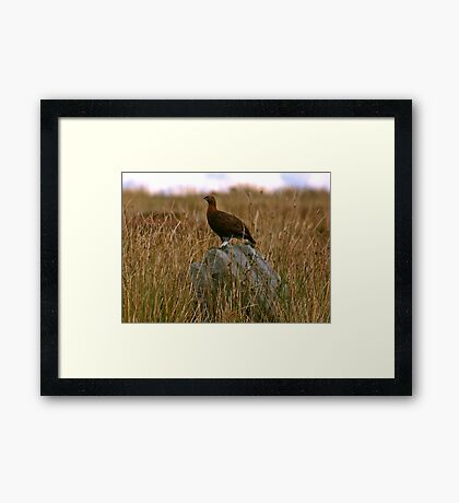 Rock Grouse Framed Print