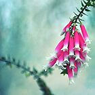 Fuchsia Forest Bells by Cloudlingpics