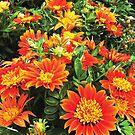 Flowers Full of Light by Jerald Simon (Music Motivation - musicmotivation.com) by jeraldsimon
