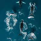 Whales in Blue - Wildlife Aerial by Michael Schauer