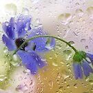 Rain by maf01