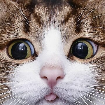 Funny Face Cat by desexperiencia
