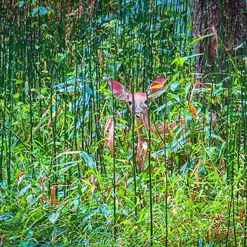 Fawn In The Leaves  by PaulLu