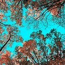 autumn orange teal by varickridge
