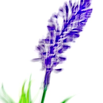 Motioned blurred purple wild flower on white background  by PhotoStock-Isra