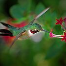 Hummingbird arial by joemc