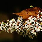 Autumn Leaf & Asters  by lorilee