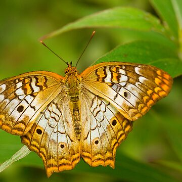 Butterfly Comfortably Perched by mgurdus