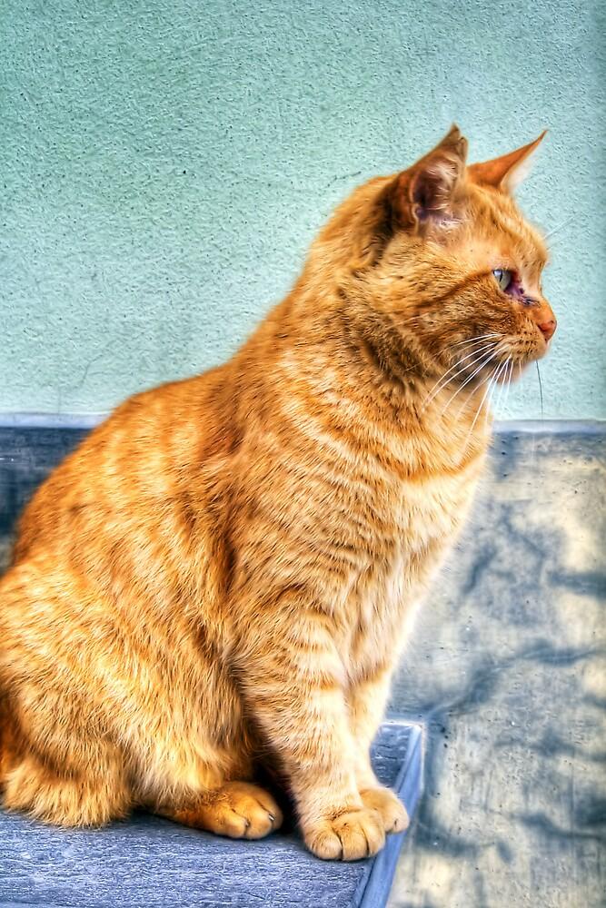 Stray Cat by oreundici