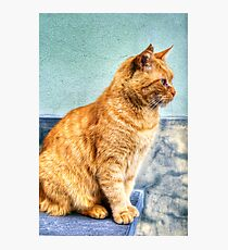 Stray Cat Photographic Print